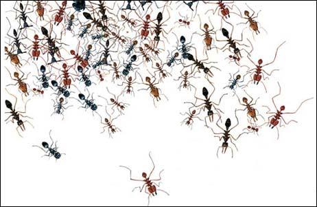 Karıncalar...