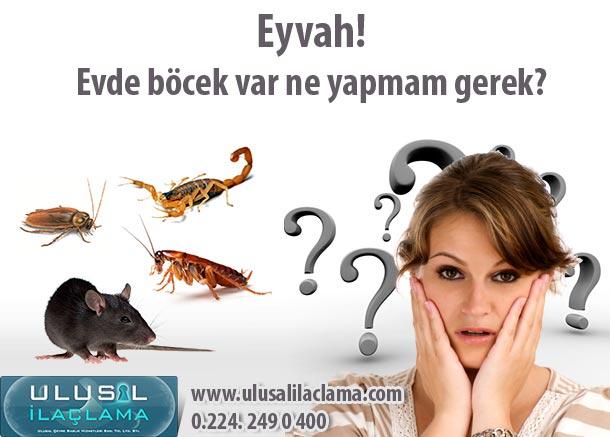 Eyvah Evde Böcek Var...