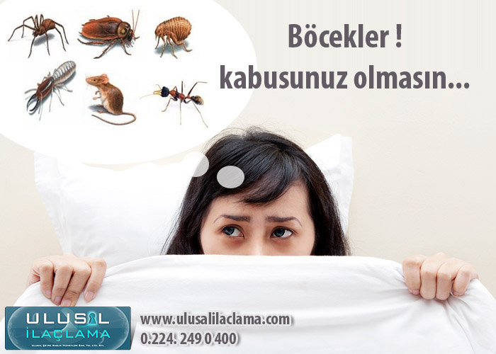 Böcekler ! Kabusunuz olmasın......